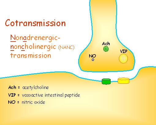 cotransmission