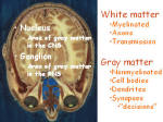 white and gray matter