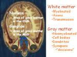 white and gray matter