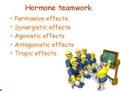 hormone teamwork