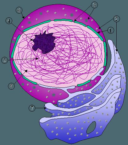 nucleus_er