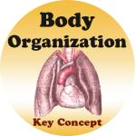 Body Structure badge