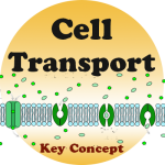 Cell Transport badge