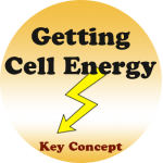 Getting Energy badge
