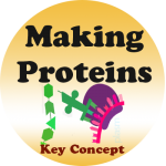 Protein Synthesis badge