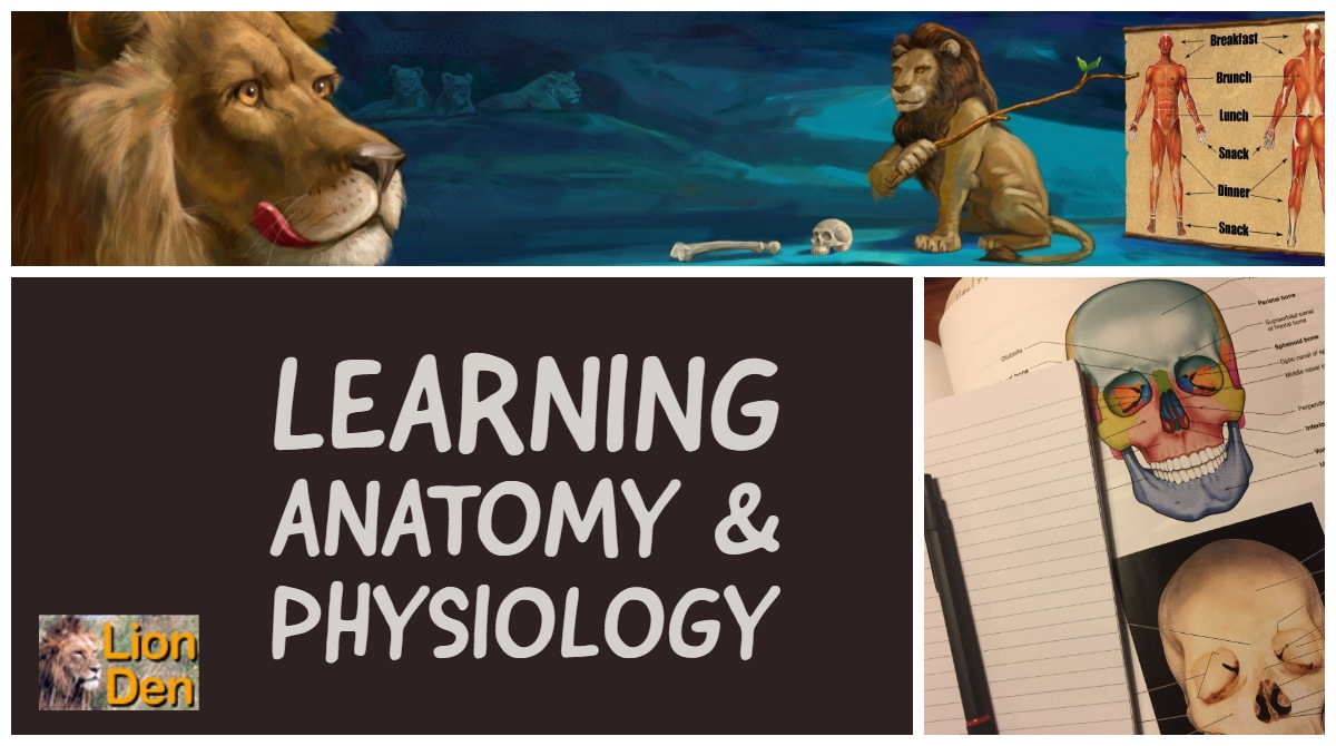 List Of Study Tips Tools For Success In Anatomy Physiology