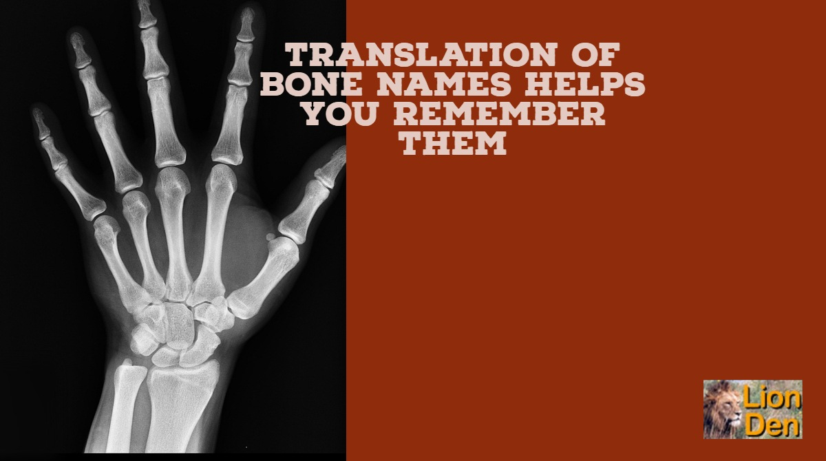 Bone Names Translation Of Bone Names Helps You Remember Them