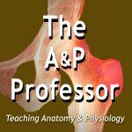 The A&P Professor logo
